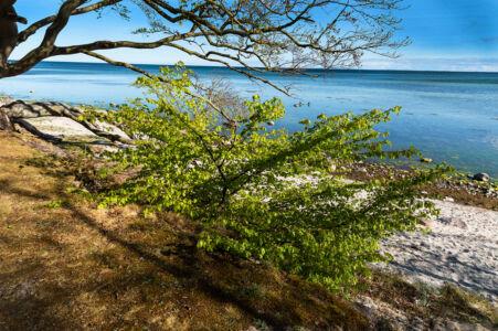 Billede 7 Ingolf Kristensen 1 point